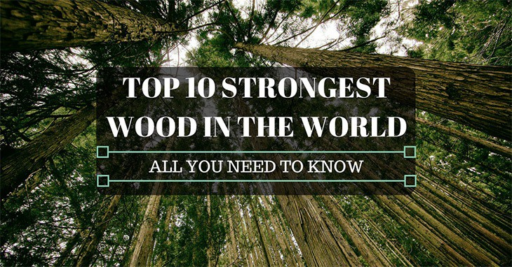 Top 10 Strongest Wood In The World All You Need To Know
